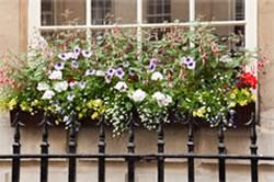 FG_FlowerBox_Gardening_1