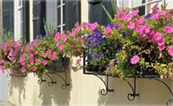 FG_FlowerBox_Gardening_2