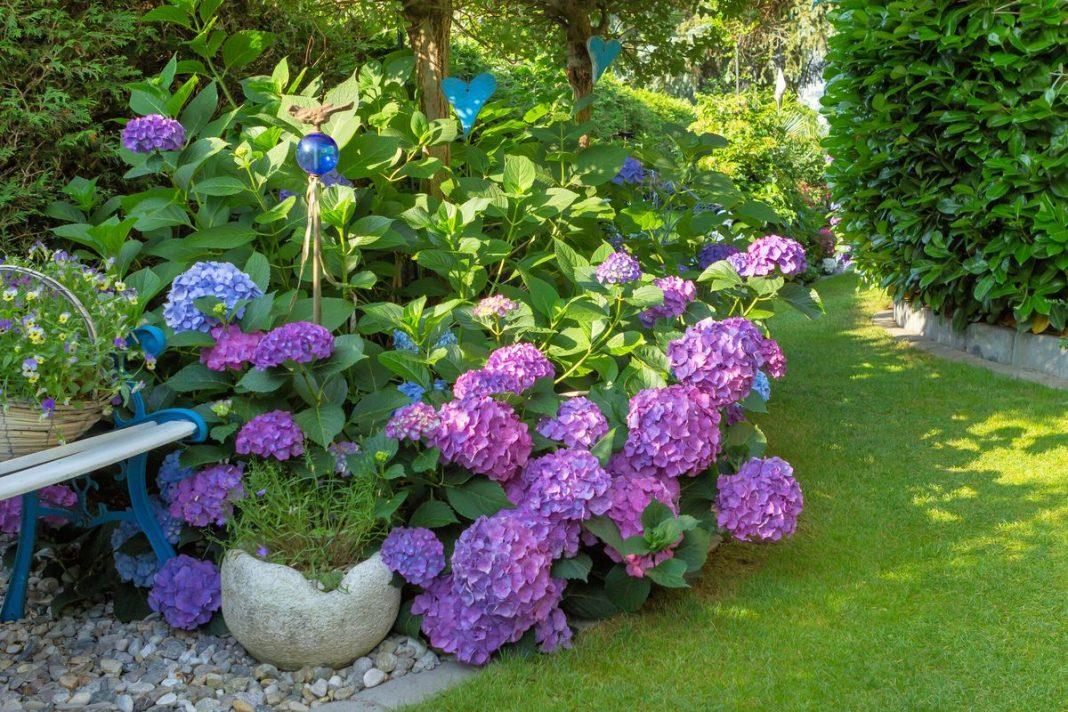 List of Perennial Flowers